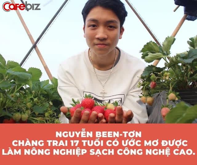 Trồng dâu trên sân thượng, nam sinh 17 tuổi Nghệ An kiếm hàng chục triệu đồng - Ảnh 3.