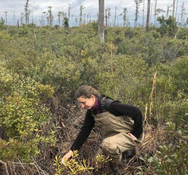 Thứ gì đó đang giết chết cây cối, biến những khu rừng ở bờ đông nước Mỹ thành rừng ma - Ảnh 2.