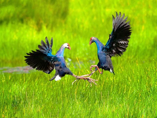 Không chỉ có miệt vườn sông nước mênh mang, miền Tây Nam Bộ còn có những rừng tràm xanh mướt hút hồn du khách: Địa điểm đổi gió tuyệt vời dịp 30/4 - 1/5 tới! - Ảnh 7.
