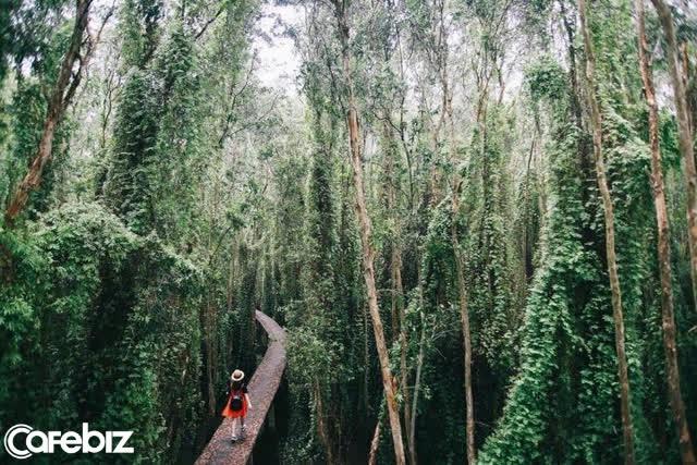 Không chỉ có miệt vườn sông nước mênh mang, miền Tây Nam Bộ còn có những rừng tràm xanh mướt hút hồn du khách: Địa điểm đổi gió tuyệt vời dịp 30/4 - 1/5 tới! - Ảnh 9.