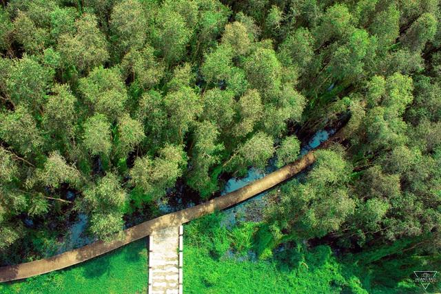 Không chỉ có miệt vườn sông nước mênh mang, miền Tây Nam Bộ còn có những rừng tràm xanh mướt hút hồn du khách: Địa điểm đổi gió tuyệt vời dịp 30/4 - 1/5 tới! - Ảnh 10.