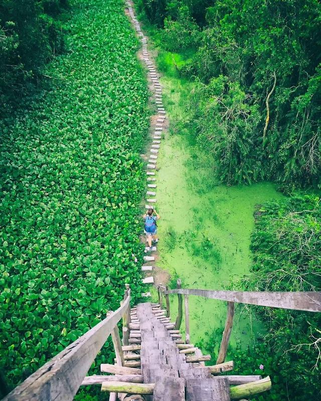 Không chỉ có miệt vườn sông nước mênh mang, miền Tây Nam Bộ còn có những rừng tràm xanh mướt hút hồn du khách: Địa điểm đổi gió tuyệt vời dịp 30/4 - 1/5 tới! - Ảnh 5.