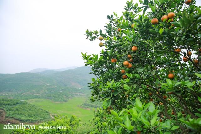 Chàng công tử đất Hà thành bỏ phố lên núi làm chủ 3 quả đồi trồng cam, mỗi năm kiếm cả tỷ bỏ túi nhưng cũng bị vùi dập đến tơi bời  - Ảnh 3.