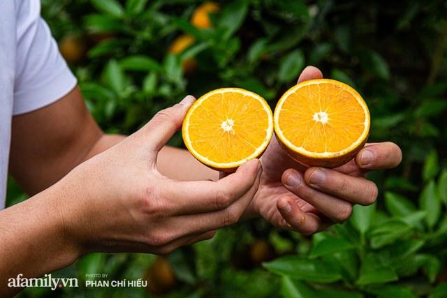Chàng công tử đất Hà thành bỏ phố lên núi làm chủ 3 quả đồi trồng cam, mỗi năm kiếm cả tỷ bỏ túi nhưng cũng bị vùi dập đến tơi bời  - Ảnh 7.