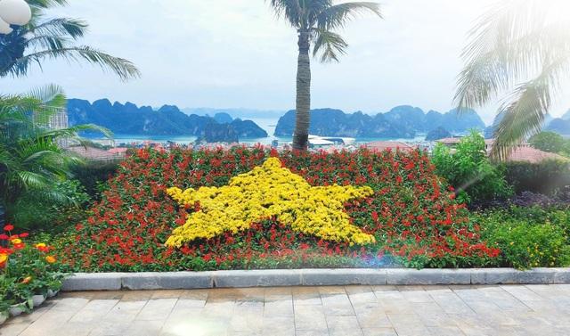Ngàn hoa khoe sắc trên đồi cao tại Hạ Long: khung cảnh độc đáo thu hút du khách dịp 30/4 - Ảnh 8.