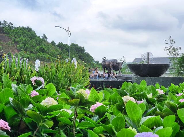 Ngàn hoa khoe sắc trên đồi cao tại Hạ Long: khung cảnh độc đáo thu hút du khách dịp 30/4 - Ảnh 9.
