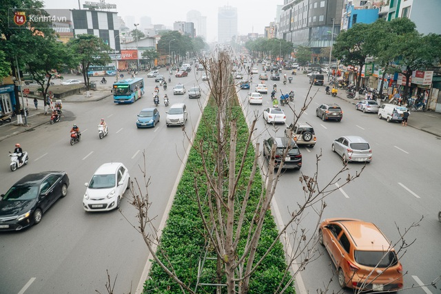 Hàng phong lá đỏ ở Hà Nội: Từ kỳ vọng Châu Âu giữa lòng Thủ đô đến những cành củi khô sắp bị thay thế - Ảnh 1.