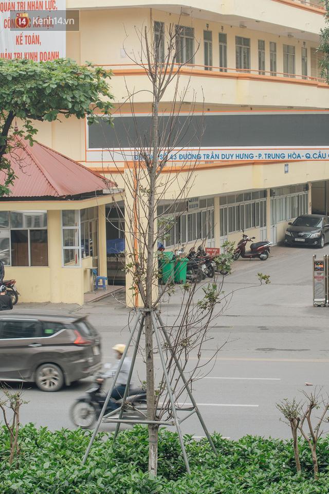 Hàng phong lá đỏ ở Hà Nội: Từ kỳ vọng Châu Âu giữa lòng Thủ đô đến những cành củi khô sắp bị thay thế - Ảnh 13.