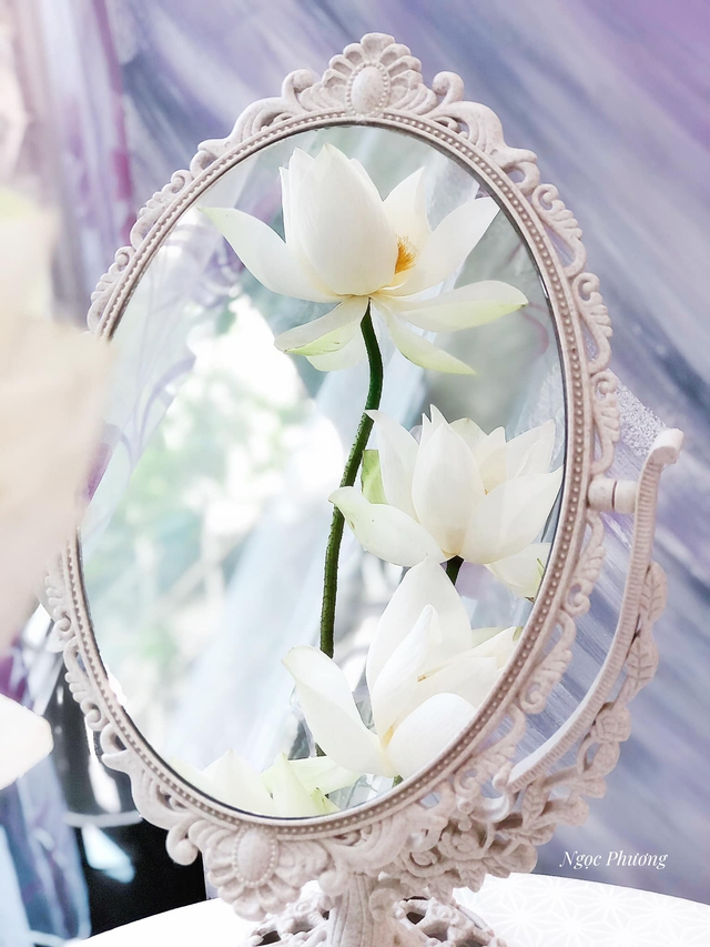 Mê mẩn hương hoa, mẹ đảm Hà Nội kỳ công đặt mua loài sen Đế Vương tận xứ Huế và tiết lộ bí kíp chơi hoa bền đẹp - Ảnh 3.