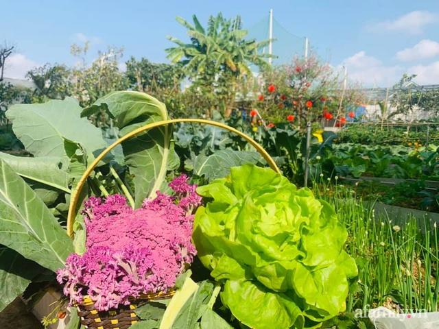 Nông trại rộng 300m² đẹp như cổ tích với đủ loại hoa và rau quả của mẹ 4 con ở Móng Cái, Quảng Ninh - Ảnh 12.