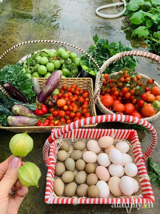 Nông trại rộng 300m² đẹp như cổ tích với đủ loại hoa và rau quả của mẹ 4 con ở Móng Cái, Quảng Ninh - Ảnh 14.