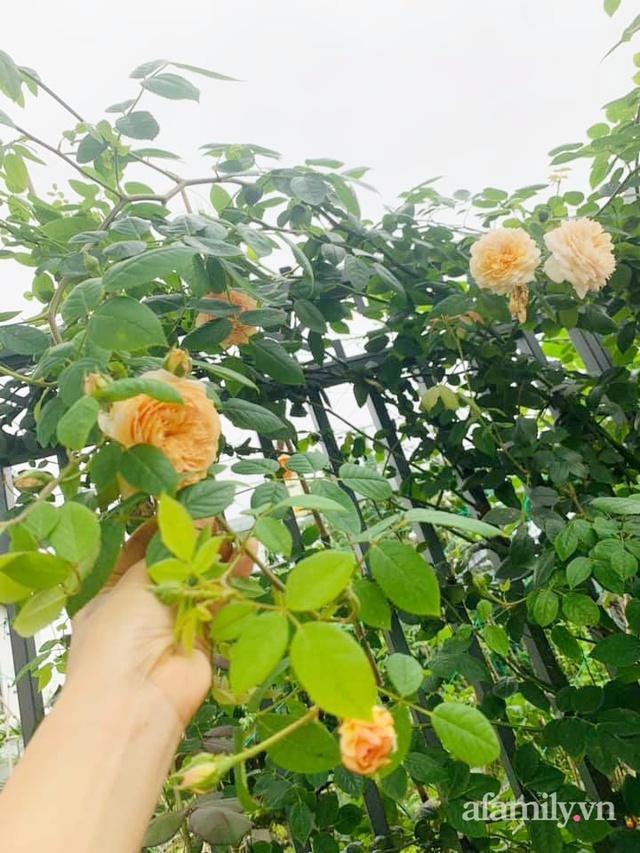 Nông trại rộng 300m² đẹp như cổ tích với đủ loại hoa và rau quả của mẹ 4 con ở Móng Cái, Quảng Ninh - Ảnh 23.