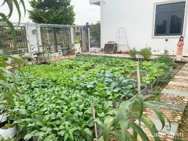 Nông trại rộng 300m² đẹp như cổ tích với đủ loại hoa và rau quả của mẹ 4 con ở Móng Cái, Quảng Ninh - Ảnh 4.