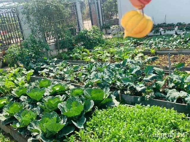 Nông trại rộng 300m² đẹp như cổ tích với đủ loại hoa và rau quả của mẹ 4 con ở Móng Cái, Quảng Ninh - Ảnh 5.
