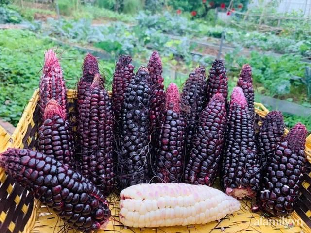 Nông trại rộng 300m² đẹp như cổ tích với đủ loại hoa và rau quả của mẹ 4 con ở Móng Cái, Quảng Ninh - Ảnh 10.