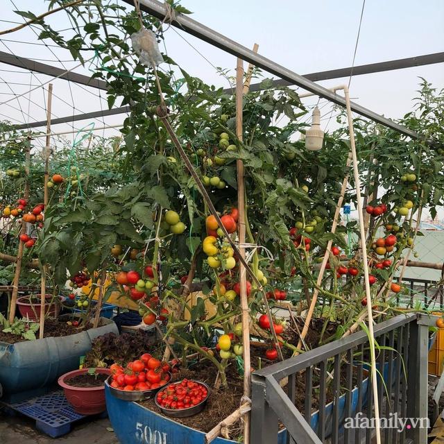 Sân thượng 100m² xanh tươi rau quả sạch của mẹ đảm ở Đà Nẵng - Ảnh 14.