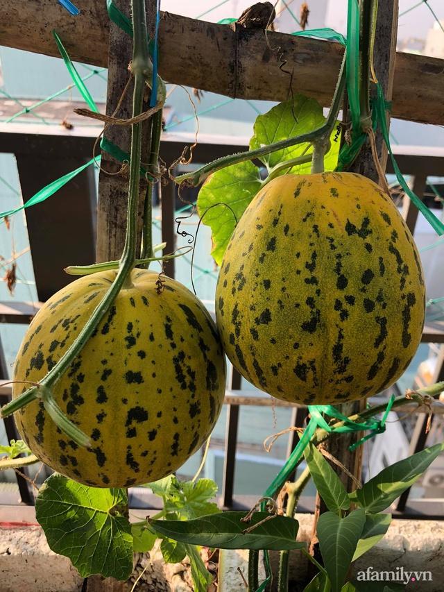 Sân thượng 100m² xanh tươi rau quả sạch của mẹ đảm ở Đà Nẵng - Ảnh 20.