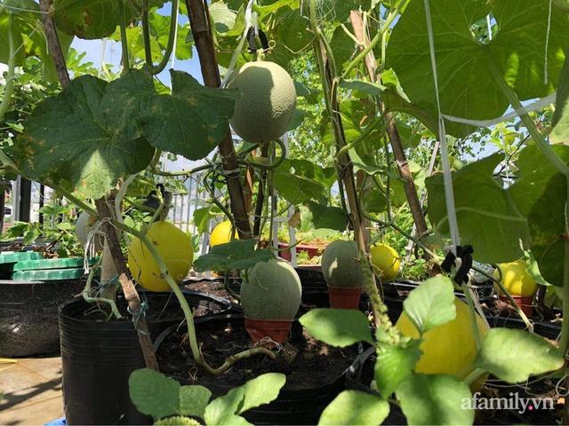 Sân thượng 100m² xanh tươi rau quả sạch của mẹ đảm ở Đà Nẵng - Ảnh 3.