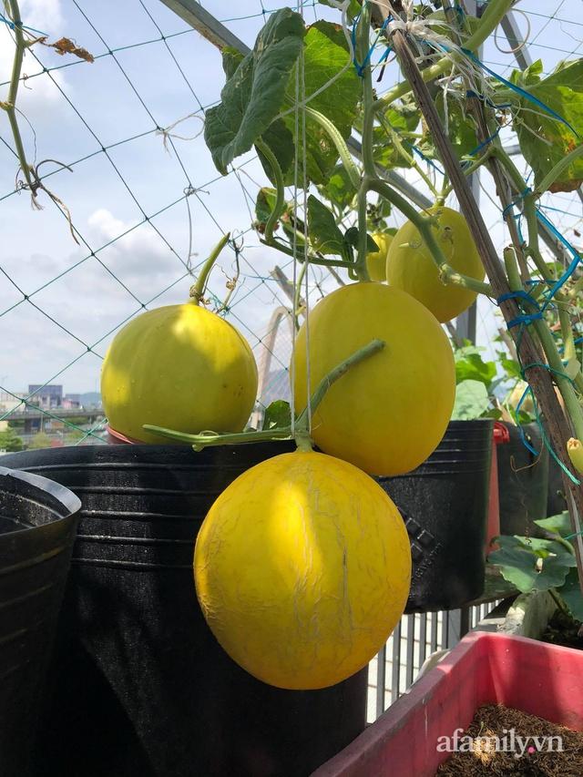 Sân thượng 100m² xanh tươi rau quả sạch của mẹ đảm ở Đà Nẵng - Ảnh 21.
