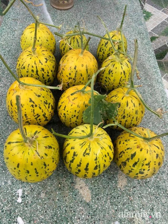 Sân thượng 100m² xanh tươi rau quả sạch của mẹ đảm ở Đà Nẵng - Ảnh 26.