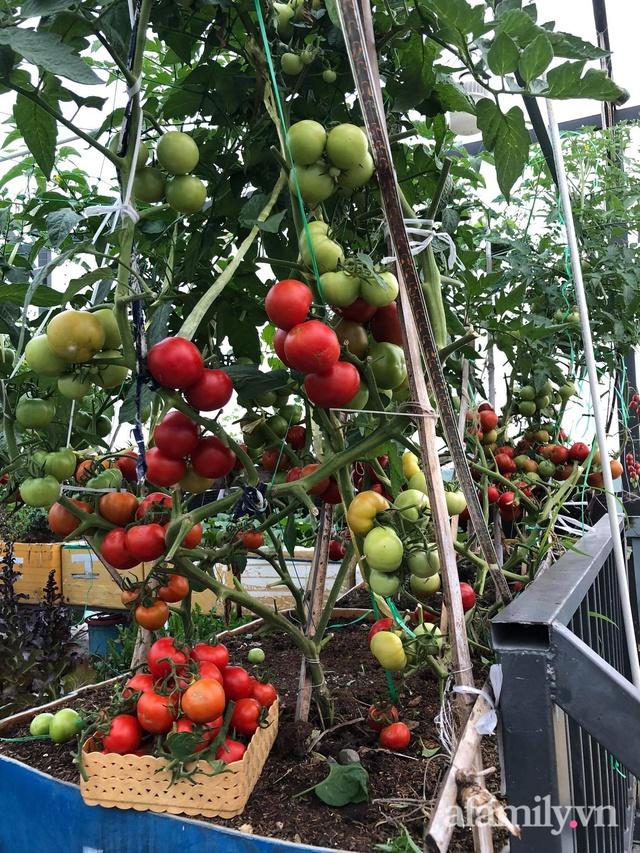 Sân thượng 100m² xanh tươi rau quả sạch của mẹ đảm ở Đà Nẵng - Ảnh 33.