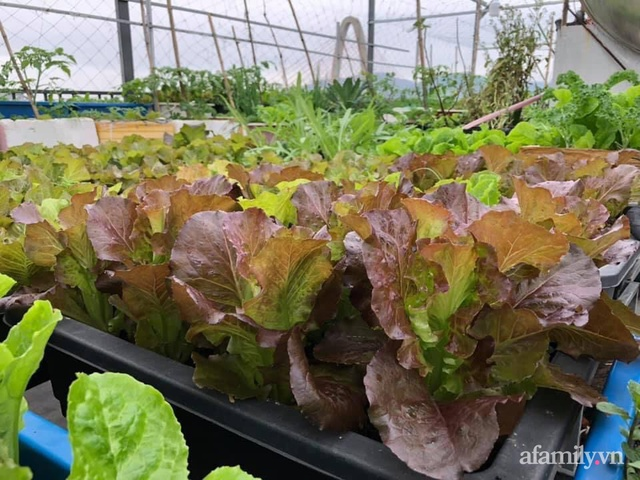 Sân thượng 100m² xanh tươi rau quả sạch của mẹ đảm ở Đà Nẵng - Ảnh 5.