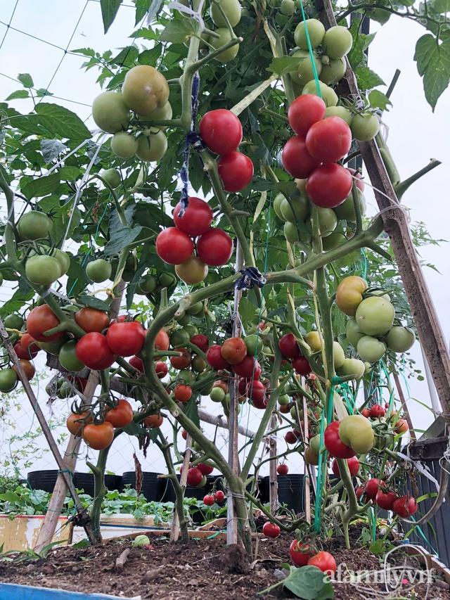 Sân thượng 100m² xanh tươi rau quả sạch của mẹ đảm ở Đà Nẵng - Ảnh 6.