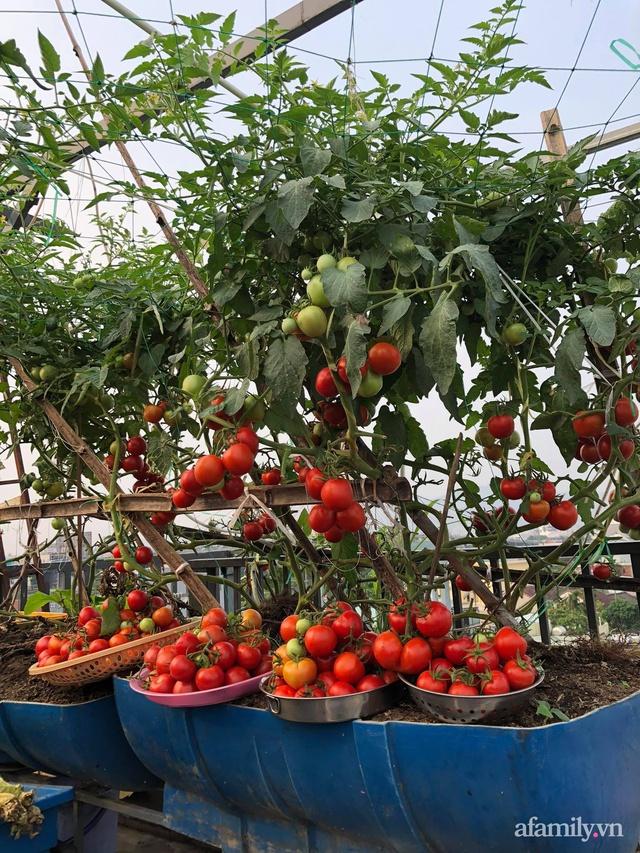 Sân thượng 100m² xanh tươi rau quả sạch của mẹ đảm ở Đà Nẵng - Ảnh 9.