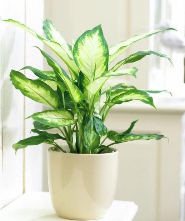 7 loại cây cảnh phổ biến nhưng có độc, nên cân nhắc kỹ trước khi trồng - Ảnh 1.