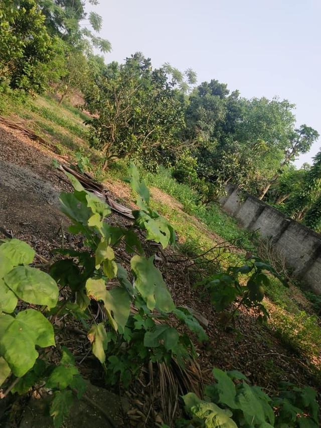 Mỗi tháng tiết kiệm ít nhất 1 chỉ vàng, mẹ ở Hà Nội sau gần 10 năm đã có 2 mảnh đất nền ưng ý - Ảnh 3.