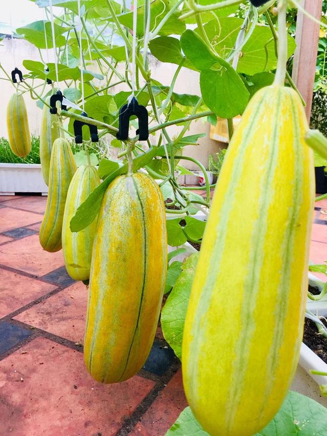 Cô gái phù phép sân thượng thành vườn dưa sai trĩu quả, quả nào quả nấy múp míp thấy mê - Ảnh 10.