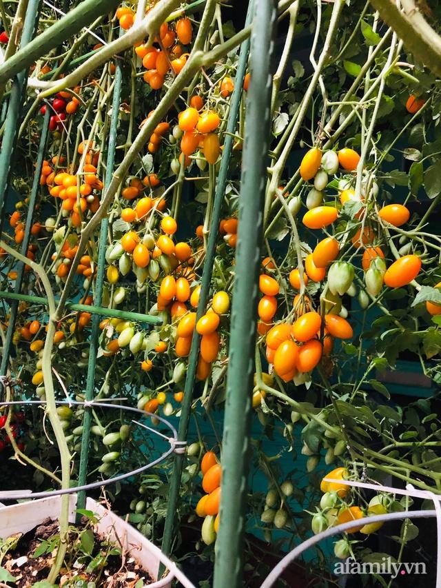 Khu vườn thạch sanh bội thu rau quả quanh năm trên sân thượng ở Sài Gòn - Ảnh 13.