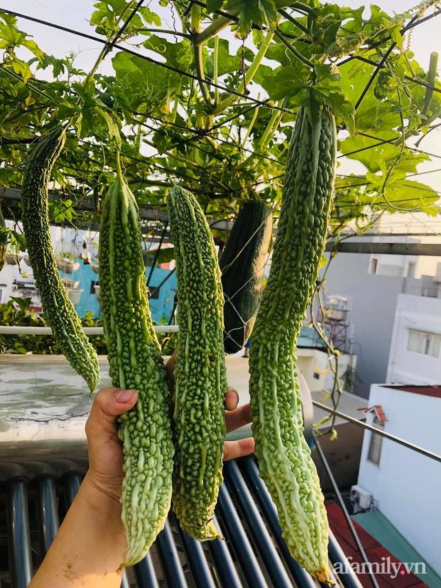Khu vườn thạch sanh bội thu rau quả quanh năm trên sân thượng ở Sài Gòn - Ảnh 14.