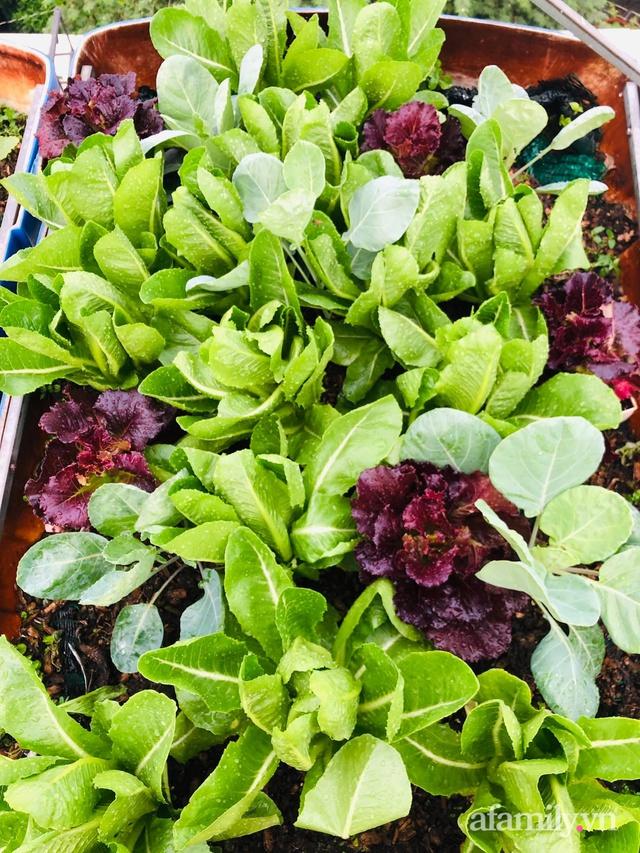 Khu vườn thạch sanh bội thu rau quả quanh năm trên sân thượng ở Sài Gòn - Ảnh 17.