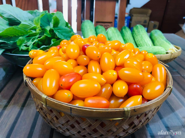 Khu vườn thạch sanh bội thu rau quả quanh năm trên sân thượng ở Sài Gòn - Ảnh 33.