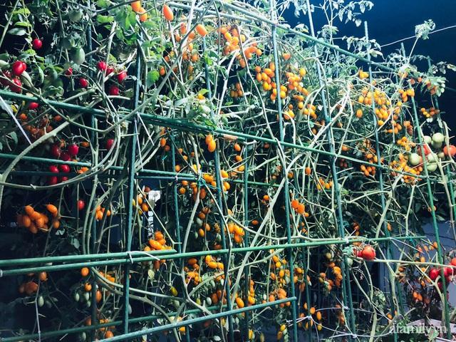 Khu vườn thạch sanh bội thu rau quả quanh năm trên sân thượng ở Sài Gòn - Ảnh 7.