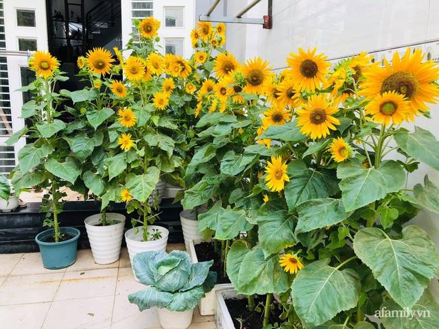 Khu vườn thạch sanh bội thu rau quả quanh năm trên sân thượng ở Sài Gòn - Ảnh 8.