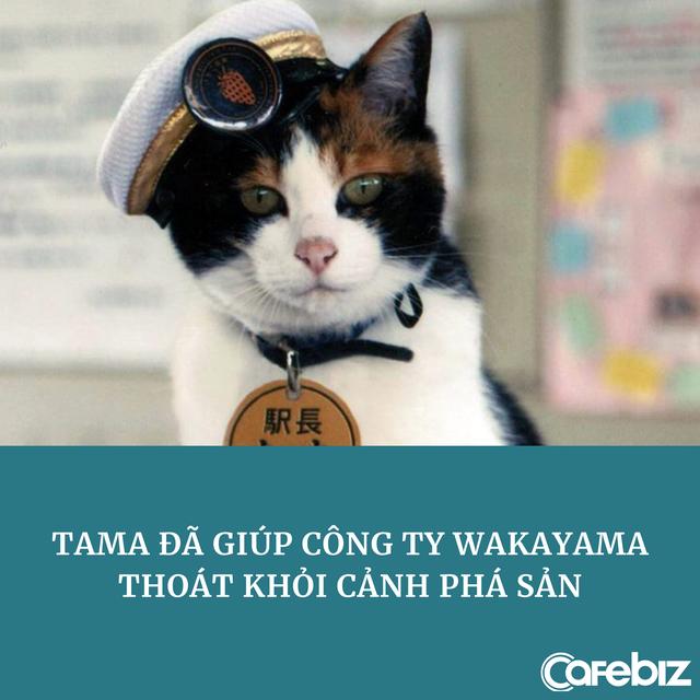 Marketing đỉnh cao: Chỉ dùng một con mèo hoang thu về 8,9 triệu USD, cứu công ty thoát cảnh phá sản - Ảnh 1.