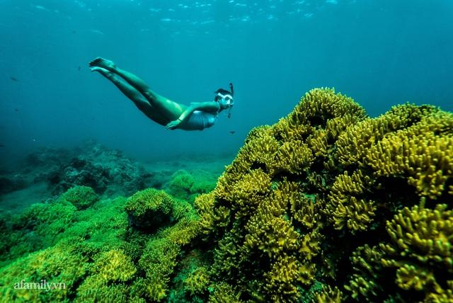 Zen Le - Cô gái Sài Gòn đam mê thể thao lặn biển đích thân trải nghiệm những tầng đại dương nguy hiểm mà không phải ai cũng được tới  - Ảnh 8.