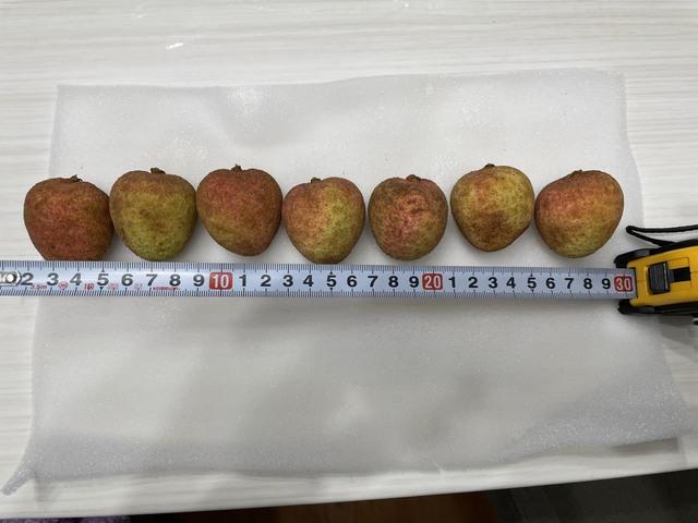 Vải thiều Bắc Giang – từ nông trại đến siêu thị Nhật: Phải đủ 10 bước xử lý – bảo quản từ lúc thu hoạch đến nằm ở quầy kệ, dưới sự giám sát nghiêm ngặt của VIAEP - Ảnh 7.