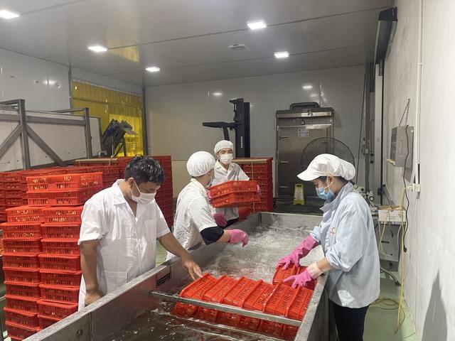 Vải thiều Bắc Giang – từ nông trại đến siêu thị Nhật: Phải đủ 10 bước xử lý – bảo quản từ lúc thu hoạch đến nằm ở quầy kệ, dưới sự giám sát nghiêm ngặt của VIAEP - Ảnh 10.