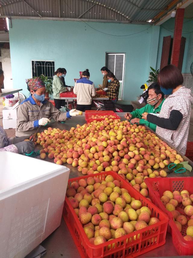 Vải thiều Bắc Giang – từ nông trại đến siêu thị Nhật: Phải đủ 10 bước xử lý – bảo quản từ lúc thu hoạch đến nằm ở quầy kệ, dưới sự giám sát nghiêm ngặt của VIAEP - Ảnh 8.