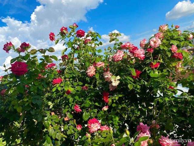 Sân thượng phủ kín hoa hồng và rau quả sạch ở Sài Gòn của Hoa hậu Janny Thủy Trần - Ảnh 2.