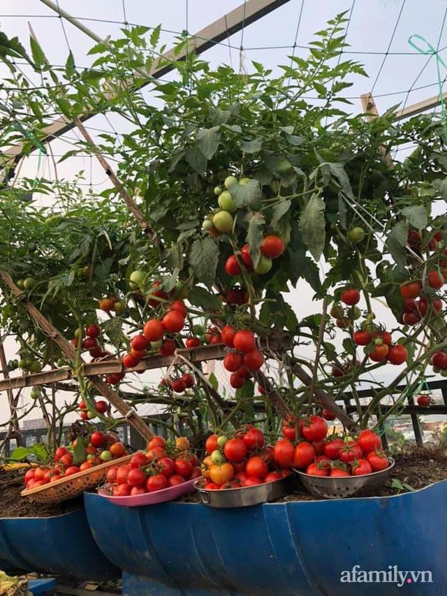 """Mẹ Đà Nẵng tạo ra """"nông trại"""" rau quả sạch trên tầng thượng giúp cả nhà vui khỏe trong những ngày giãn cách - Ảnh 2."""