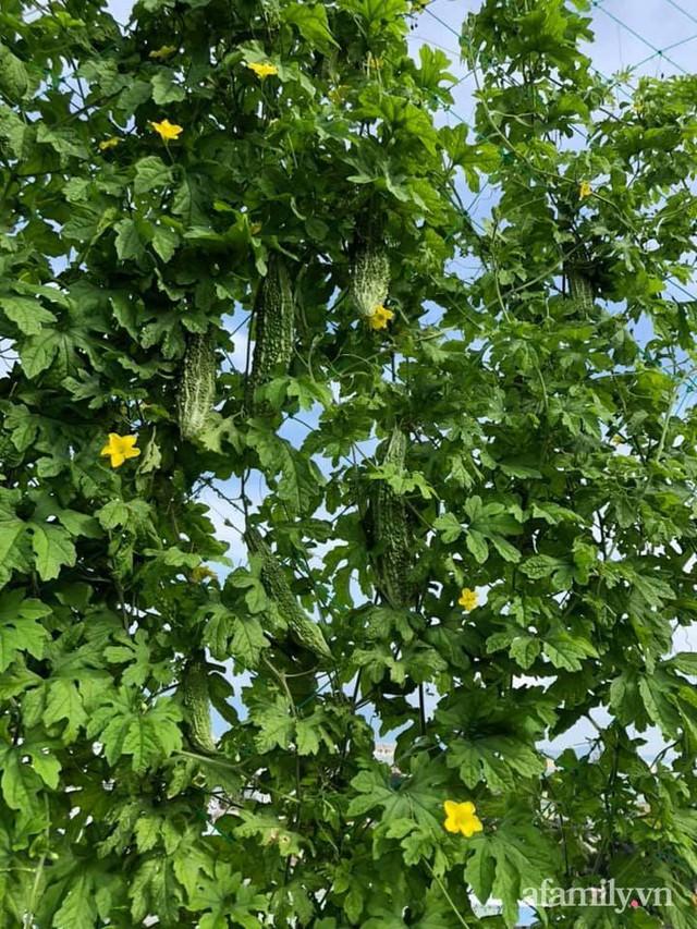 """Mẹ Đà Nẵng tạo ra """"nông trại"""" rau quả sạch trên tầng thượng giúp cả nhà vui khỏe trong những ngày giãn cách - Ảnh 11."""