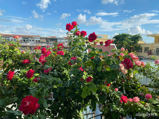 Sân thượng phủ kín hoa hồng và rau quả sạch ở Sài Gòn của Hoa hậu Janny Thủy Trần - Ảnh 12.