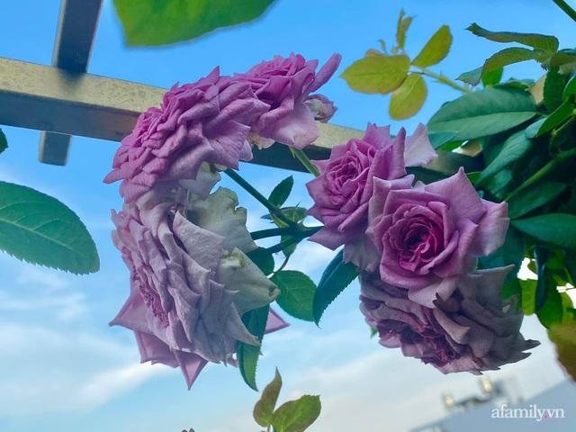 Sân thượng phủ kín hoa hồng và rau quả sạch ở Sài Gòn của Hoa hậu Janny Thủy Trần - Ảnh 13.