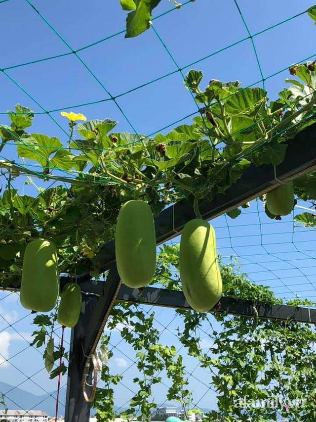 """Mẹ Đà Nẵng tạo ra """"nông trại"""" rau quả sạch trên tầng thượng giúp cả nhà vui khỏe trong những ngày giãn cách - Ảnh 13."""