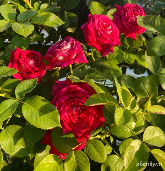 Sân thượng phủ kín hoa hồng và rau quả sạch ở Sài Gòn của Hoa hậu Janny Thủy Trần - Ảnh 15.