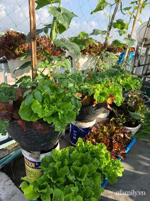 """Mẹ Đà Nẵng tạo ra """"nông trại"""" rau quả sạch trên tầng thượng giúp cả nhà vui khỏe trong những ngày giãn cách - Ảnh 15."""